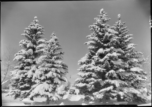 A snowy scene that won't interfere with your travel plans!   Samuel H. Knight Collection, #400044, Box 104, Negative #393.  UW American Heritage Center.