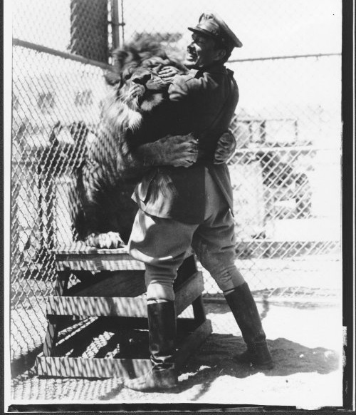 Pilot Roscoe Turner embraces his pet lion, Gilmore. The weather this year was a lot more beastly than this ol' guy!  Roscoe Turner Papers, 1897-1972, #5267, Box 113, Folder 8. UW American Heritage Center.