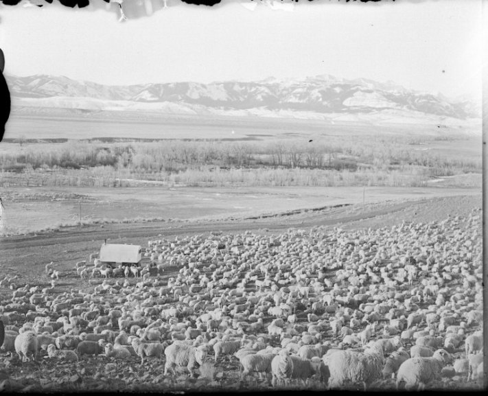 sheepwagon